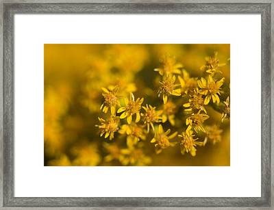 Flowers In Eastern Montana Framed Print