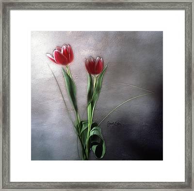 Flowers In Light Framed Print by Jack Eadon