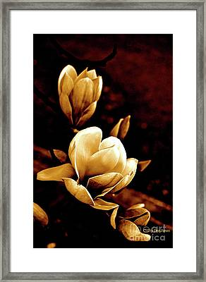 Flowers In Sepia  Framed Print