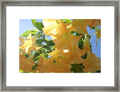Framed Print featuring the photograph Flowers In The California Sun by Carrie Maurer