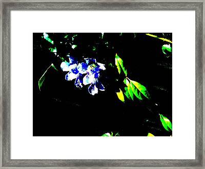 Flowers In The Dark Framed Print by Douglas Kriezel