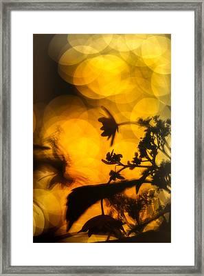 Flowers In The Dark Framed Print by Scott Wyatt