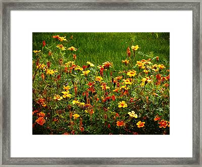Flowers In The Fields Framed Print by Joseph Frank Baraba