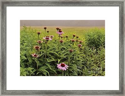 Flowers In The Fog Framed Print