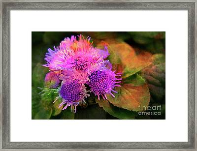 Flowers In The Garden Framed Print by Judi Bagwell
