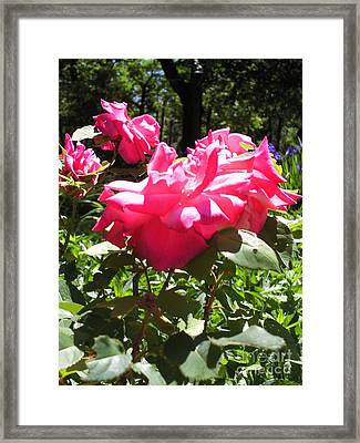 Flowers In The Garden Vi Framed Print by Daniel Henning