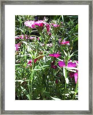 Flowers In The Garden Vii Framed Print by Daniel Henning