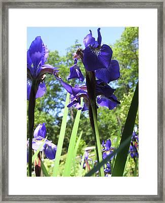 Flowers In The Garden X Framed Print by Daniel Henning