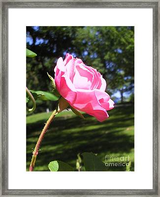 Flowers In The Garden Xix Framed Print by Daniel Henning