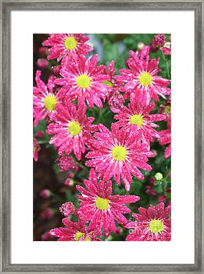 Flowers In The Rain Framed Print by Amy Holmes