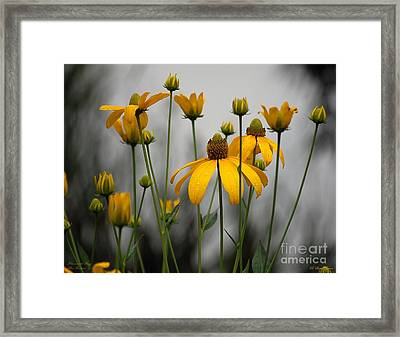 Flowers In The Rain Framed Print by Robert Meanor