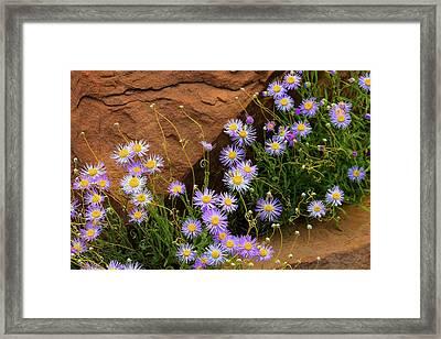 Flowers In The Rocks Framed Print by Darren White
