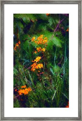 Flowers In The Woods At The Haciendia Framed Print