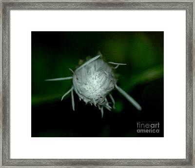 Flowers Framed Print by Lynn Reid