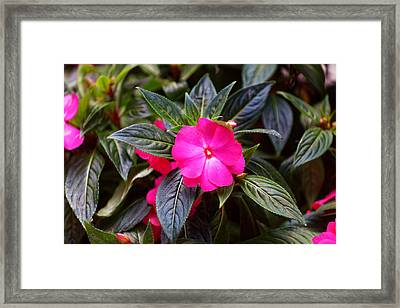 Flowers Of Battery Park II Framed Print by M Nuri Shakoor