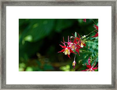Flowers Of Battery Park Framed Print by M Nuri Shakoor