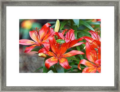 Flowers Of Central Park II Framed Print by M Nuri Shakoor