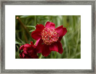 Flowers Of Central Park V Framed Print by M Nuri Shakoor