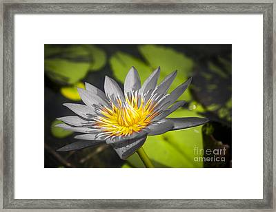 Flowers Of Grey Framed Print