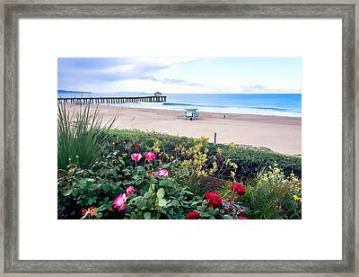 Flowers Of Manhattan Beach Framed Print by Art Block Collections