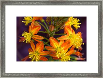 Flowers Of Spring Framed Print by Stephen Anderson