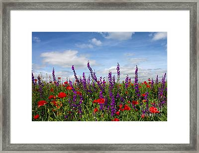 Flowers Of The Field Framed Print by Diana Kraleva
