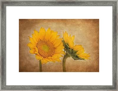 Flowers Of The Sun Framed Print by Kim Hojnacki