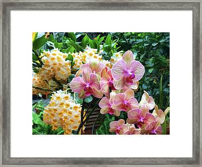 Flowers Of Wonder Framed Print
