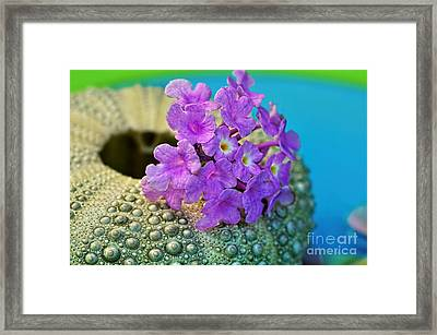 Flowers On A Shell By Kaye Menner Framed Print