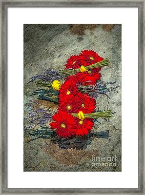 Framed Print featuring the photograph Flowers On Rocks by Nick Zelinsky