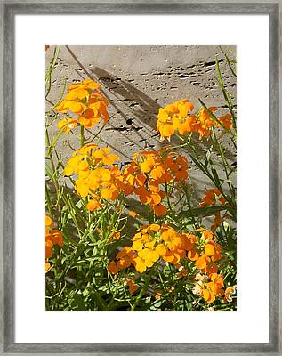 Flowers Orange 2 Framed Print by Warren Thompson