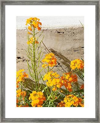 Flowers Orange Framed Print by Warren Thompson