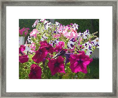Flowers Really Do Smile Framed Print by Sunaina Serna Ahluwalia