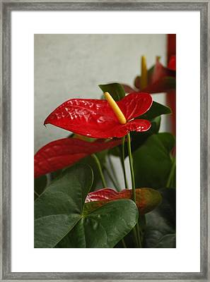 Flowers Rising Framed Print by Lori Mellen-Pagliaro