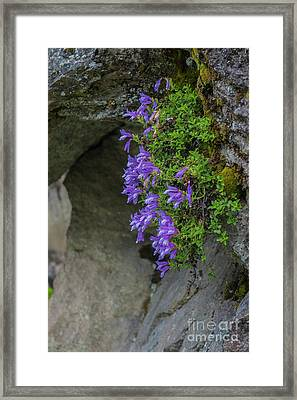 Flowers Framed Print by Rod Wiens