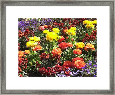 Flowers Framed Print by Sascha Meyer