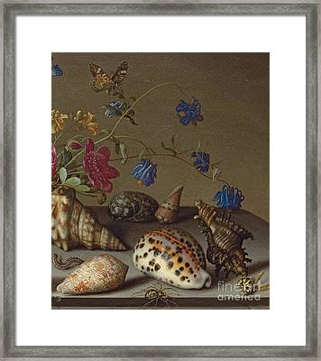 Flowers, Shells And Insects On A Stone Ledge Framed Print by Balthasar van der Ast