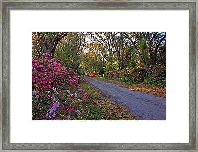 Flowers - Spring Fling Framed Print by HH Photography of Florida