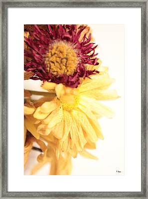 Flowers Framed Print by Thomas Leon