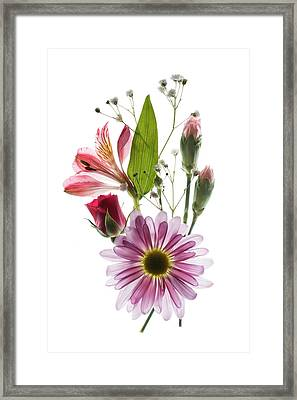 Flowers Transparent 1 Framed Print by Tom Mc Nemar