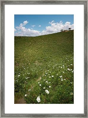 Flowery Hills Framed Print by Carlos Caetano