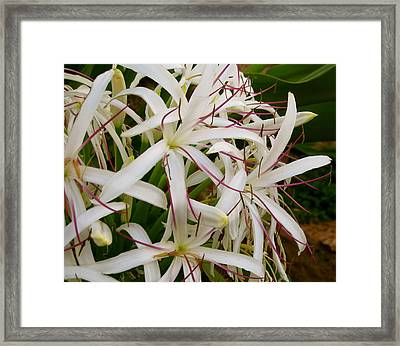 Flowery Tentacles Framed Print by Ashley Butler