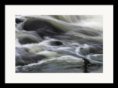 Current River Framed Prints