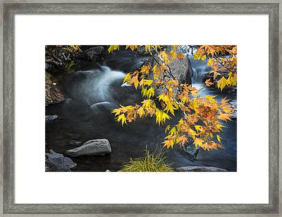 Flowing Oak Creek Canyon Under Colorful Leaves Framed Print by Dave Dilli