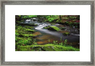 Flowing Spring Stream Framed Print by Bill Wakeley