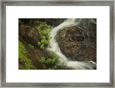 Framed Print featuring the photograph Flowing Stream by David Coblitz