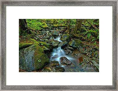 Flowing Through Moss And Ferns Framed Print