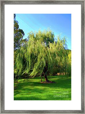 Flowing Willow Painted Framed Print by Skip Willits