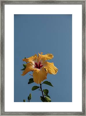 Flp-6 Framed Print