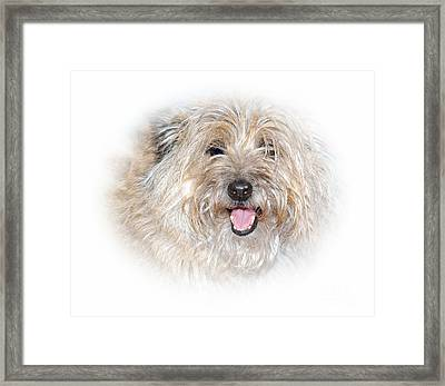 Framed Print featuring the photograph Fluff Pup by Debbie Stahre